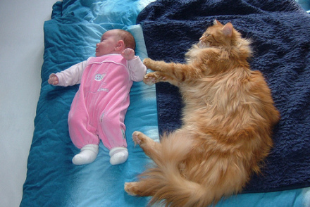 Maine Coon with Baby