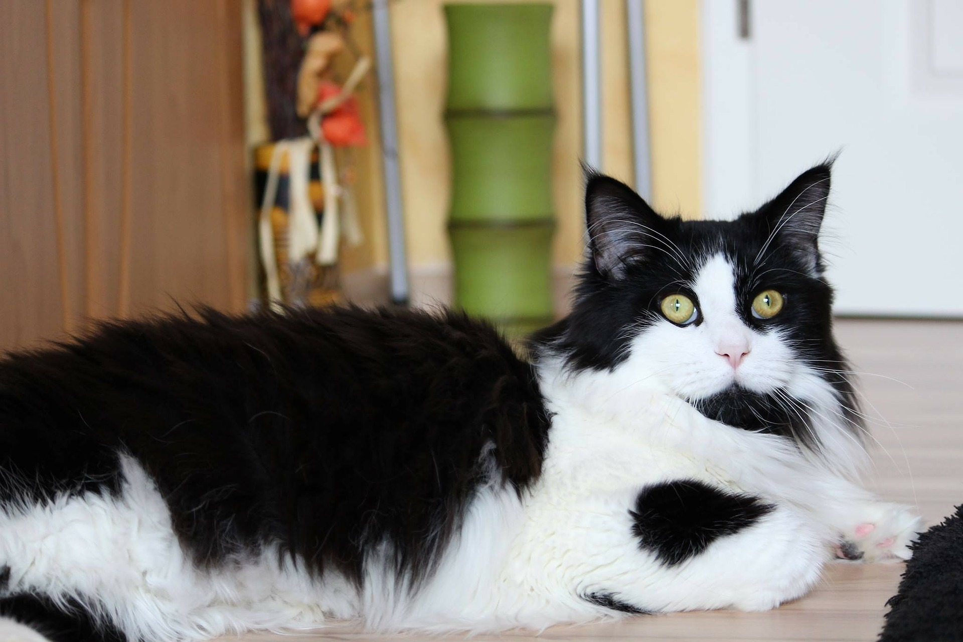 signs of constipation in cats