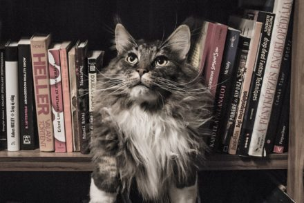 coon in bookshelf